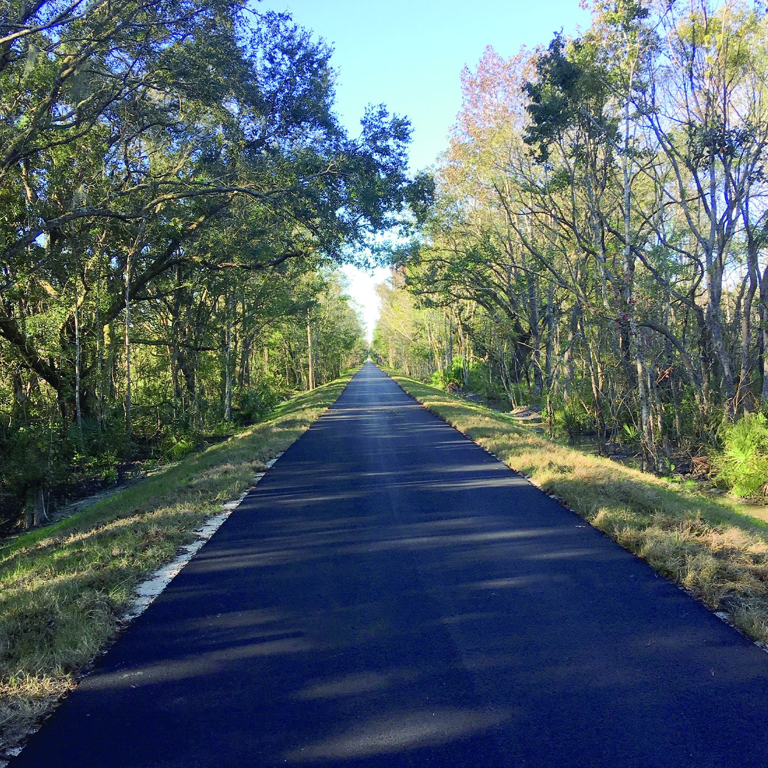 Palatka to St. Augustine State Trail with trees along both sides. Financial Management Numbers: 210286-8, 435796-1